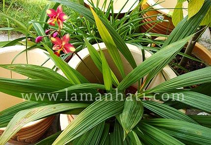 orchidtropical2.jpg